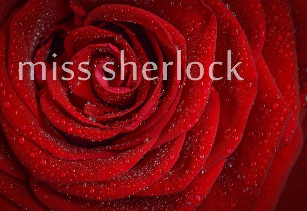 「ミス・シャーロック」見どころ4つと無料で観る方法
