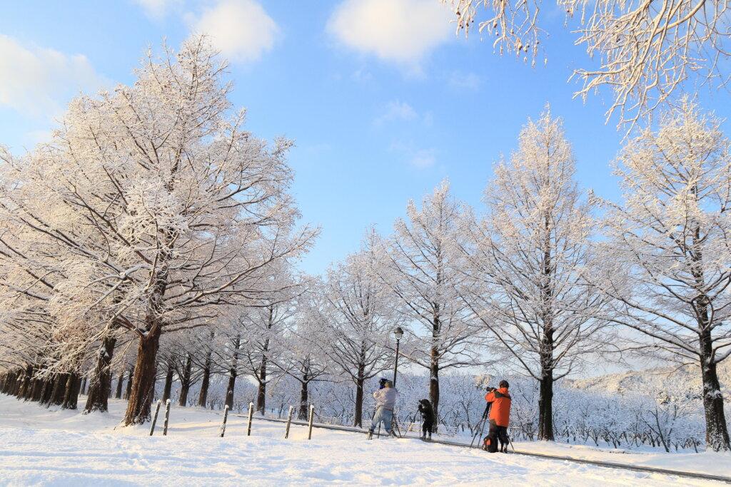 冬のメタセコイア並木 photo (公社)びわ湖高島観光協会